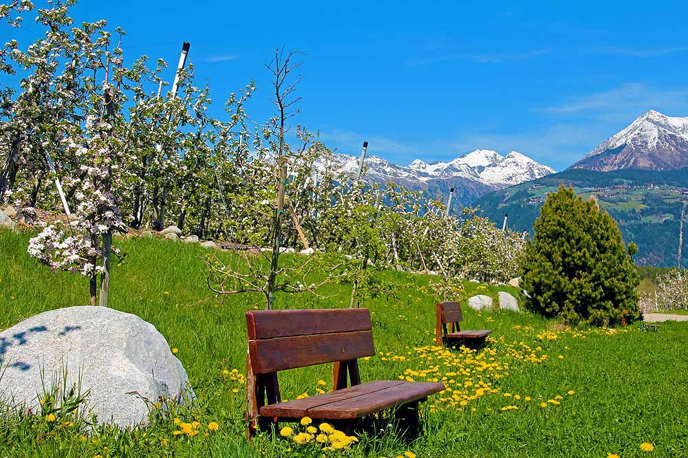 Magic apple bloom in South Tyrol