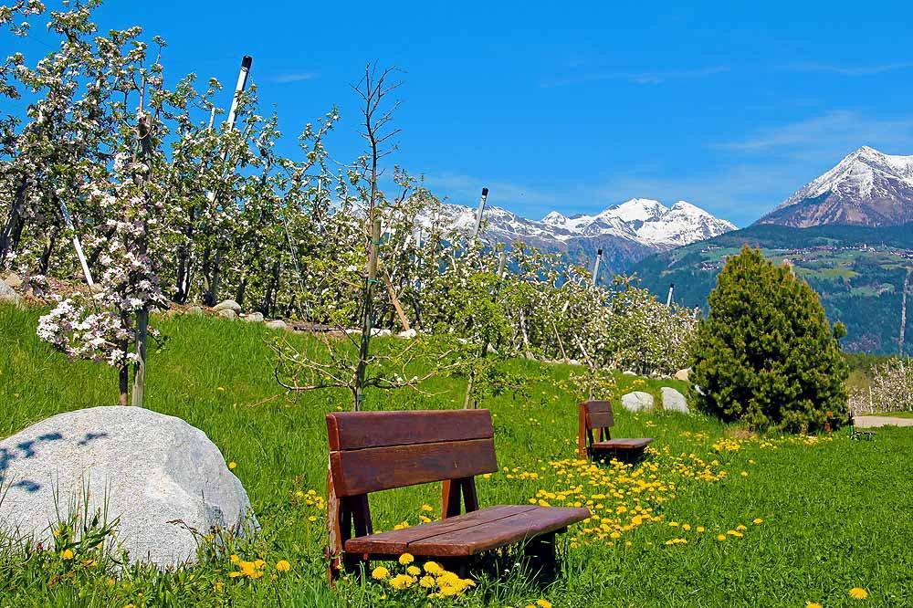 Zauberhafte Apfelblüte in Südtirol